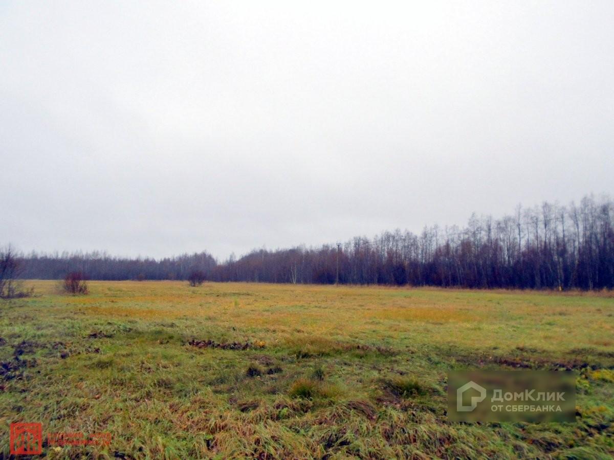 Фото краснодарского края северского района растительноядные, некоторым